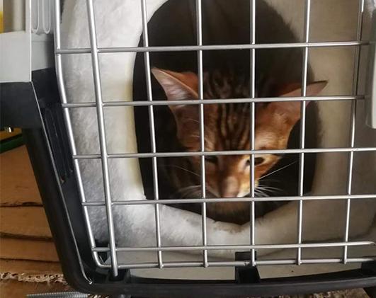 重庆猫咪托运公司