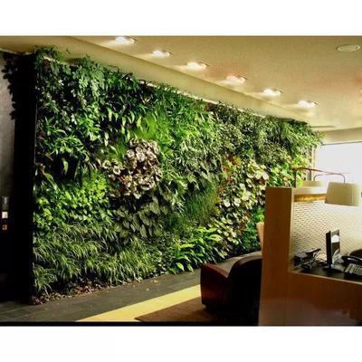 办公室垂直绿化墙