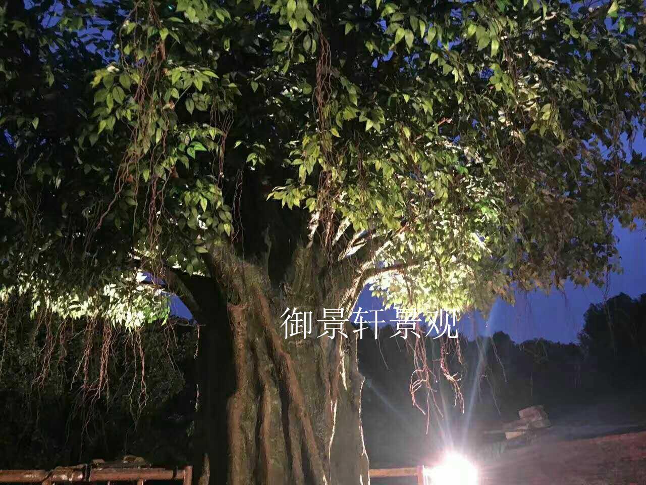 大型榕树仿真