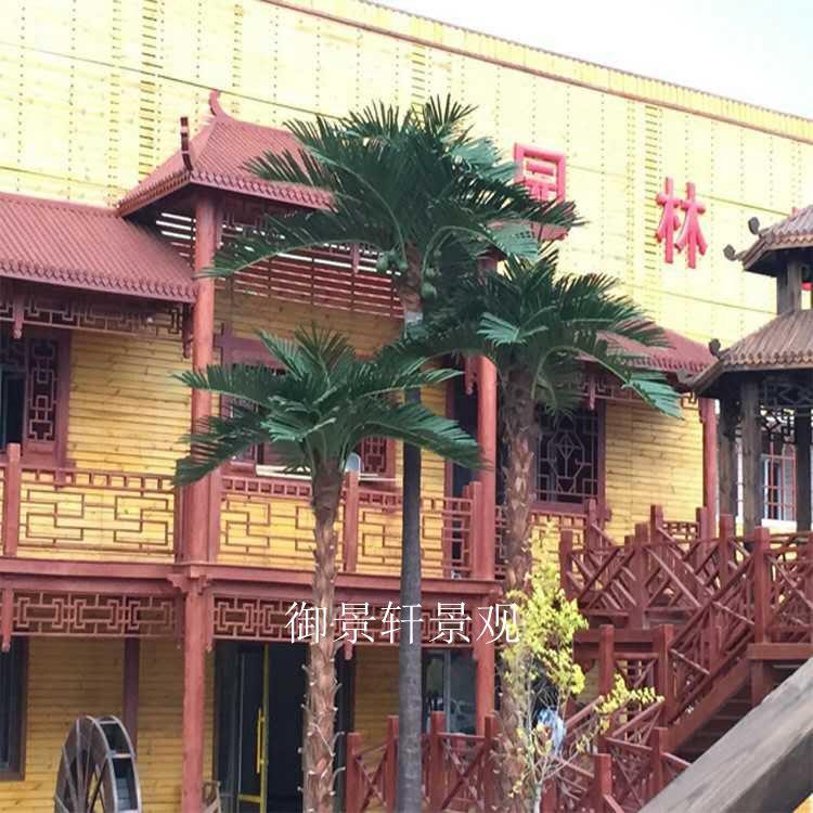 大型景观棕榈树