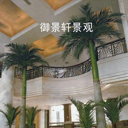 大型景观霸王椰