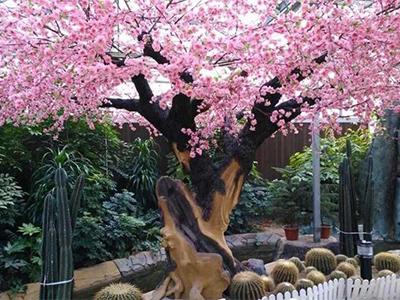 大型户外桃花树