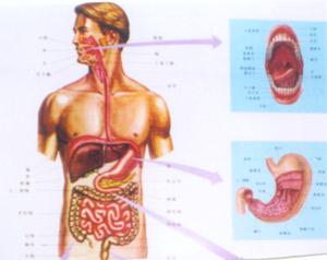 说话不清楚、大舌头矫治研究所