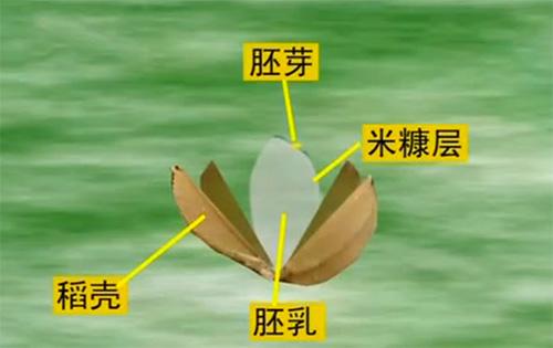 江苏新型大米加工设备