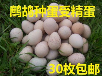 鹧鸪种蛋储藏或孵化之前消毒方法