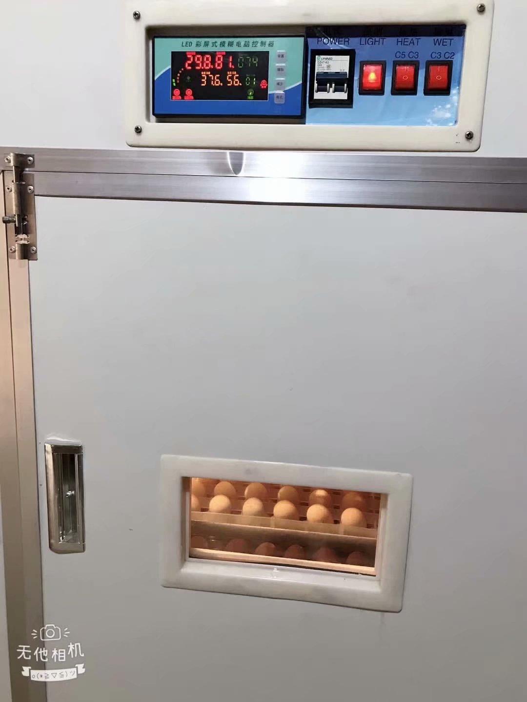 福建鹧鸪鸟开始孵化2688个鹧鸪种蛋进孵化室