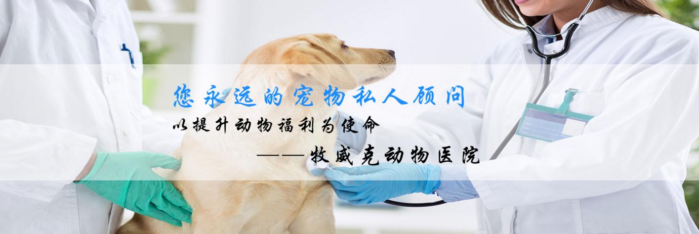新疆宠物医院加入铭赞富海360合作百度网站推广