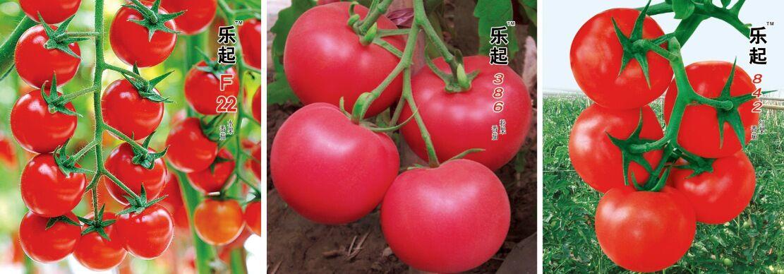 昆明蔬菜种子