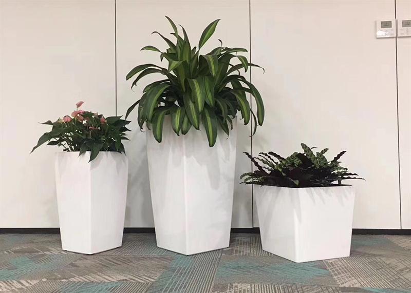 青岛海信绿植租赁