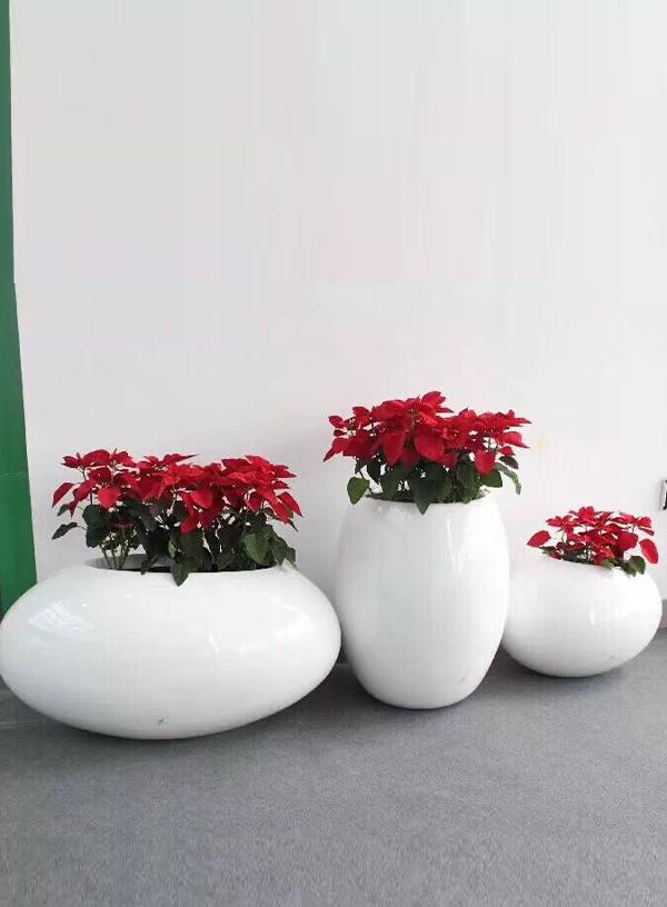 花卉租赁-一品红