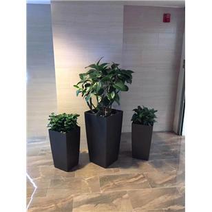 青岛绿植租赁厂家告诉您刚装修好的房子用什么植物去甲醛最好