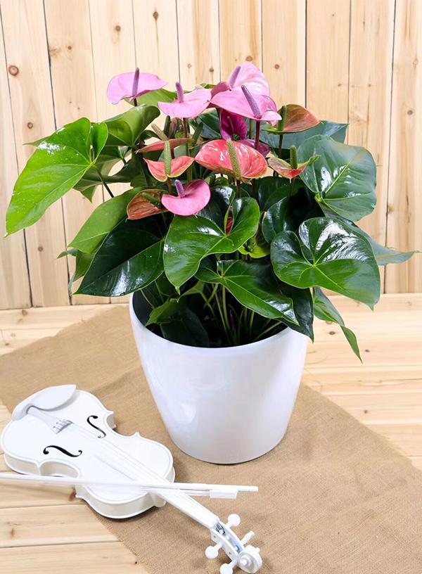 绿植花卉养护都有哪些需要注意的点呢?