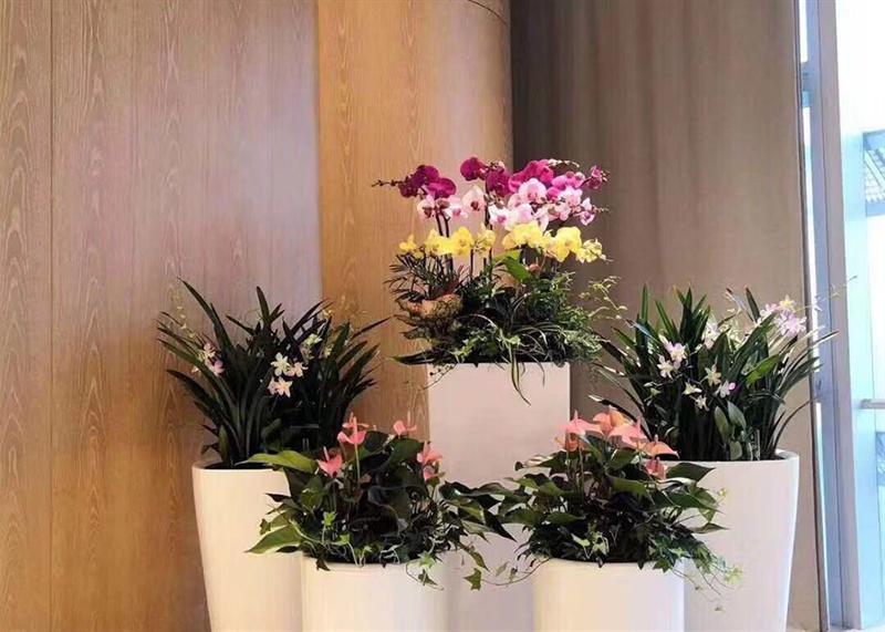 花卉租摆市场面临的现状