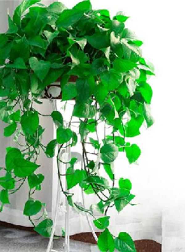 绿植租赁之办公室绿植摆放技巧