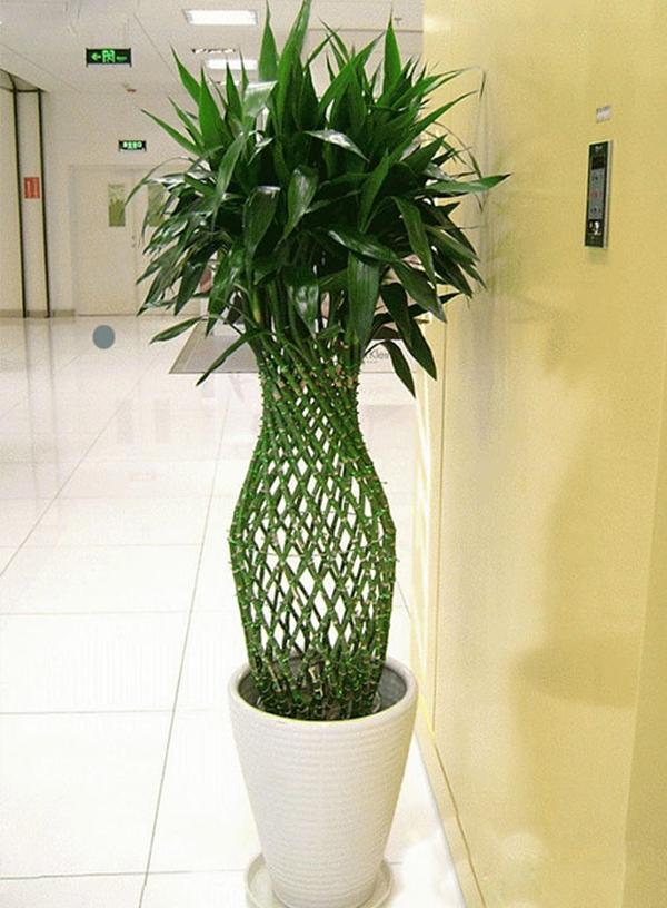 盆裁绿栽养护过程中烂根,怎么办?