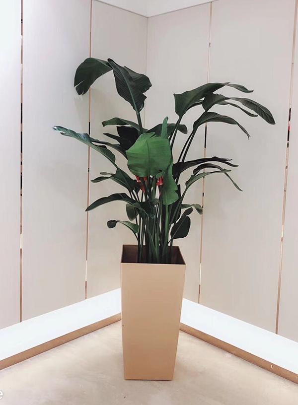 选择盆栽植物租凭有什么好处?