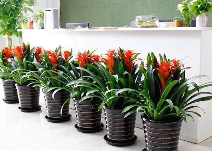 花卉租赁成本费节省一大半,顾客赞叹不已的窍门