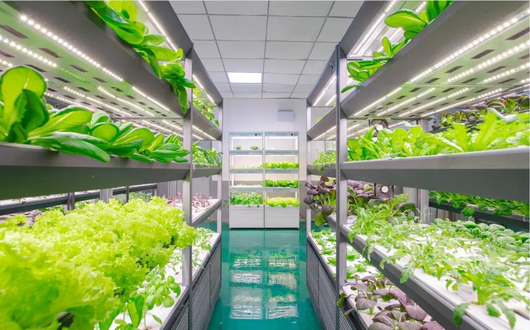 央媒探秘LED植物照明培育航天员食用蔬菜