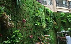 沈陽綠植墻