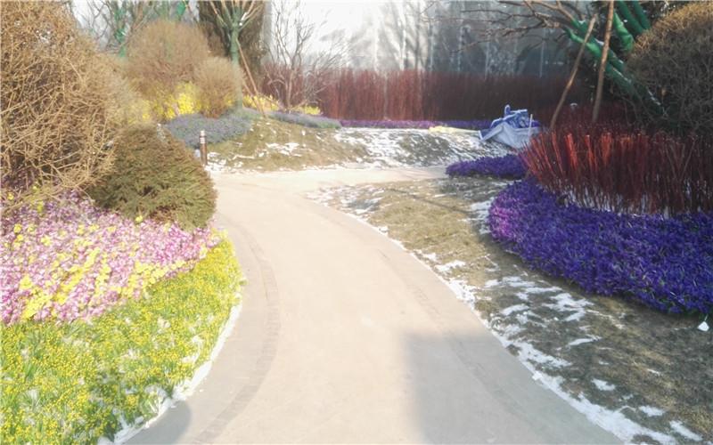 恒大盛京印象園區綠植造景