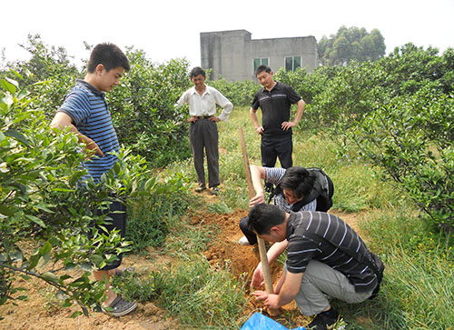 柑橘苗施肥指导