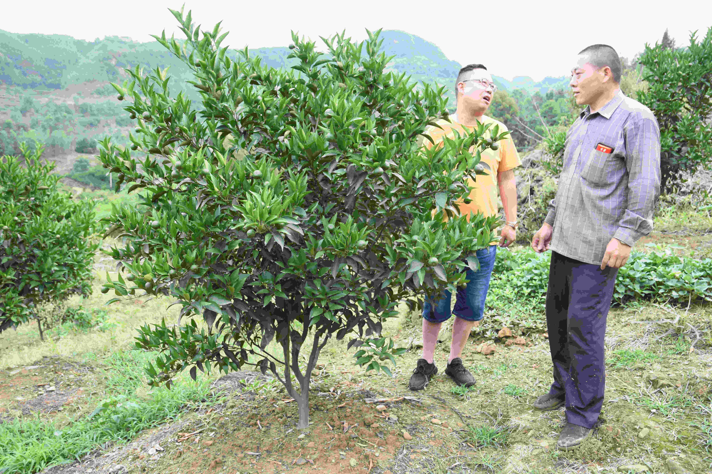 种植基地作技术指导