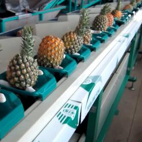 台湾统农TN-72-1质量式水果分级机