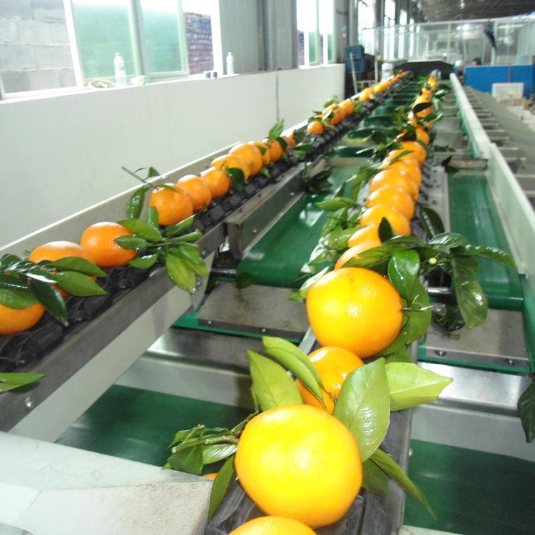 台湾统农吉农牌TN-68-2水果电脑重量分级机