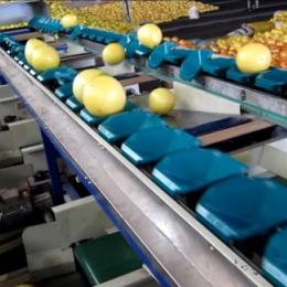 台湾统农吉农牌TN-72-2质量式水果分级机