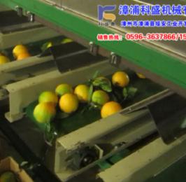 台湾统农吉农牌TN36板式选果机