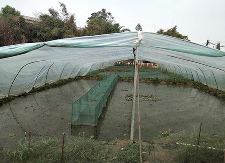雅安牛蛙养殖