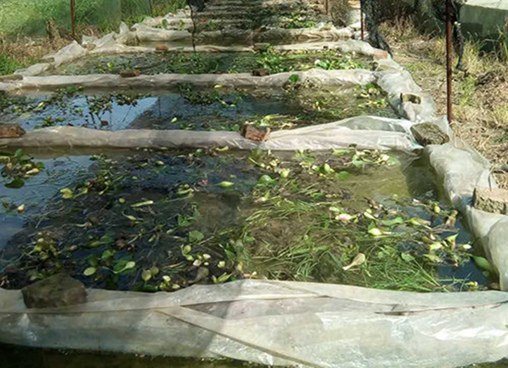 南充牛蛙养殖