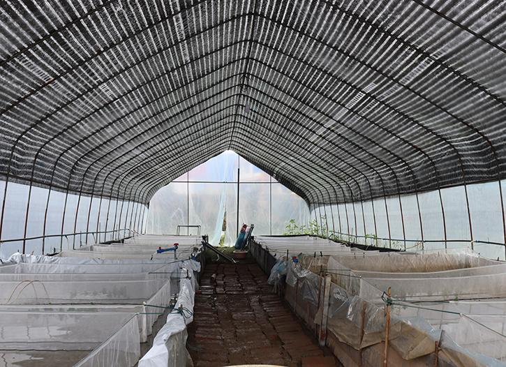 南充牛蛙养殖户来我基地预定20只牛蛙苗,预计明年春季供苗