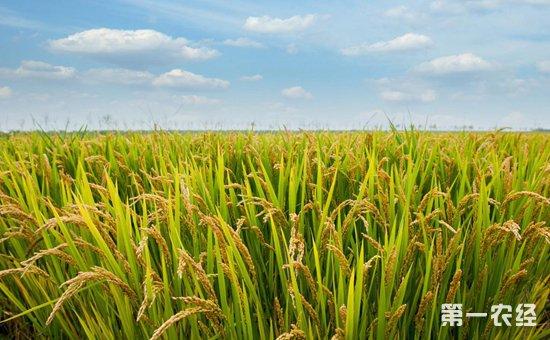 山东掌上农村电商平台国家统计局:2018全国早稻产量相比去年有所减少