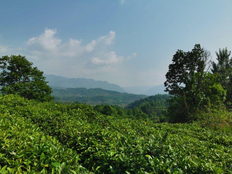 常喝红茶好处多,喝红茶要注意什么?