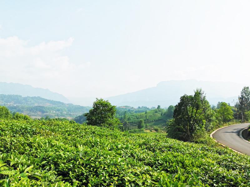 贵州普安红生产基地