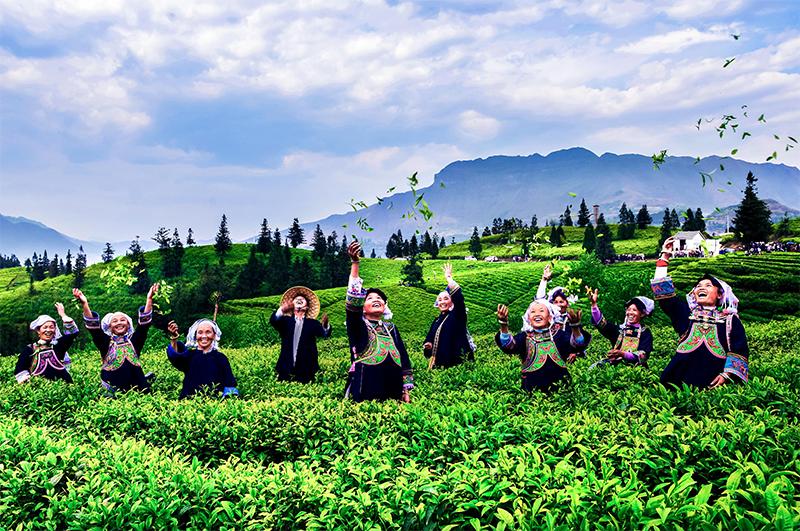 贵州茶叶公司生产基地