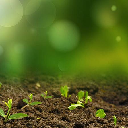 土壤和沉积物