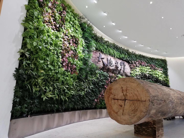 郑州室内绿植墙