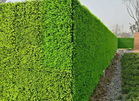 郑州垂直绿化哪家好